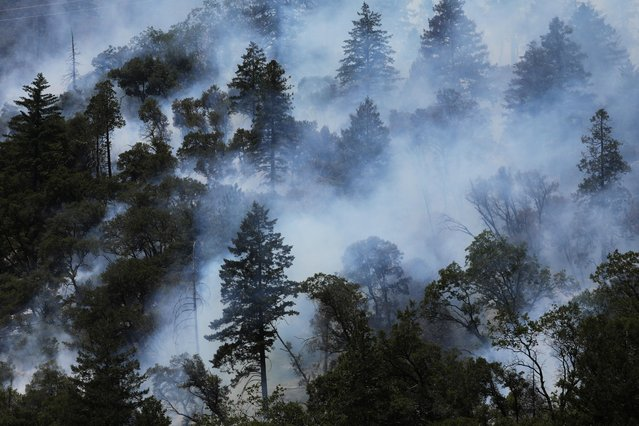 Trees smolder as the Dixie Fire grows in Plumas National Forest, California, U.S., July 15, 2021. (Photo by David Swanson/Reuters)