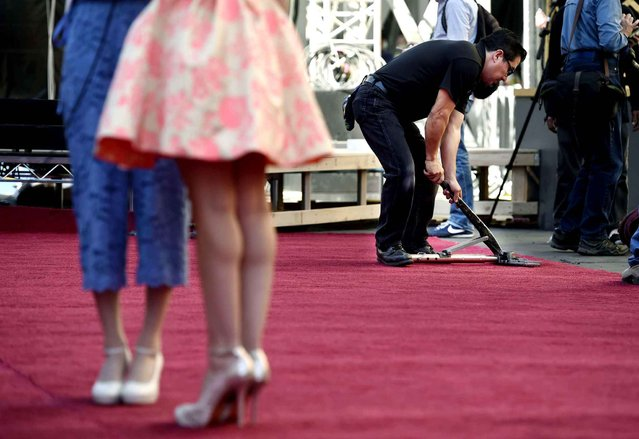 Rudy Morales, right, stretches out wrinkles in the red carpet after it was rolled out for Sunday's 88th Academy Awards, in front of the Dolby Theatre on Wednesday, February 24, 2016, in Los Angeles. (Photo by Chris Pizzello/Invision/AP Photo)
