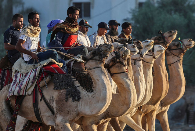Palestinians ride camels after a local race in Rafah in the southern Gaza Strip on September 14, 2021. (Photo by Said Khatib/AFP Photo)