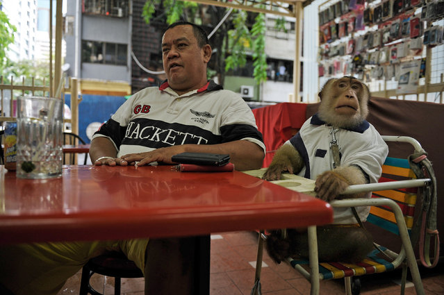 "This photo taken on April 25, 2015 shows Jamil Ismail (Jamilkucing), 45, (L) talking to a friend (unseen) as his male monkey named ""JK"" (R) looks on after their lunch at a restaurant in Kuala Lumpur. (Photo by Mohd Rasfan/AFP Photo)"
