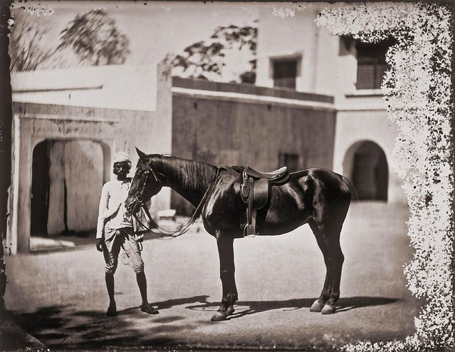 The horse of Maharajah Ram Singh III, sovereign of Jaipur, India, 1857 – 1865. (Photo by Maharaja Ram Singh III/Alinari via Getty Images)