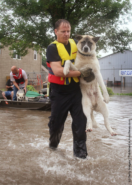 A rescue worker brings a dog to dry land after using a boat to rescue him and his owner from their home June 12, 2008 in Cedar Rapids, Iowa