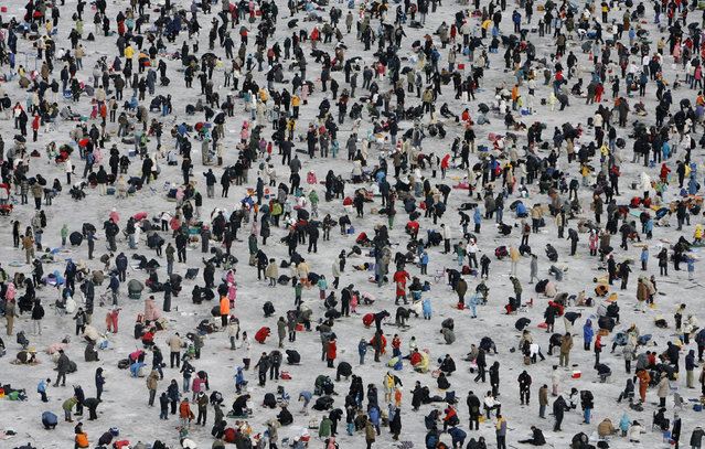People drop lines in holes on a frozen river at an event to fish trout in Hwacheon, about 20 km (12 miles) south of the demilitarized zone separating two Koreas, northeast of Seoul January 13, 2008. More than 1,000,000 people attend at the annual ice festival which lasts for three weeks in January. (Photo by Lee Jae-Won/Reuters)