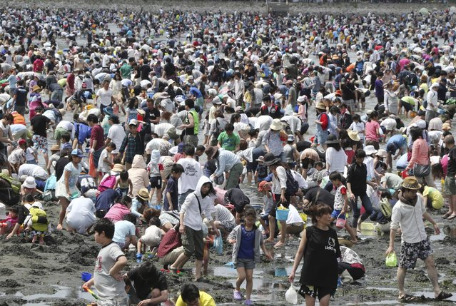 "Beachgoers dig for clams during the annual holidays known as ""Golden Week"", in Yokohama near Tokyo,  Monday, May 4, 2015. (Photo by Koji Sasahara/AP Photo)"