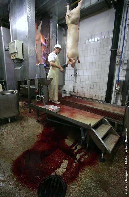 A butcher handles slaughtered pigs at a state of the art slaughterhouse