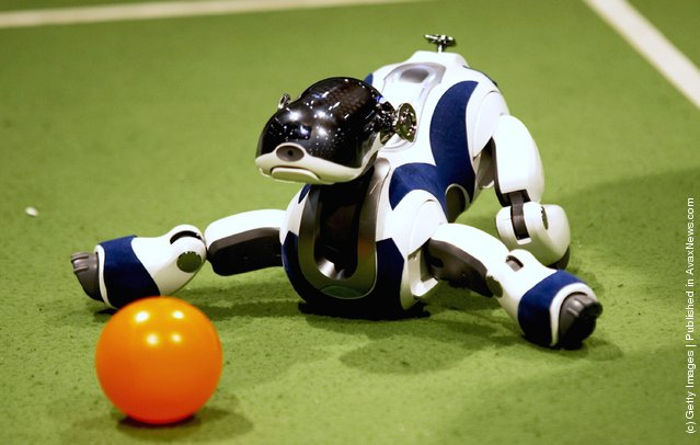 Four-legged robots compete during the RoboCup