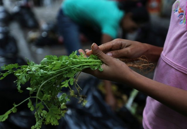 In this June 2, 2016 photo, a teenage girl cleans up discarded cilantro stalks collected from garbage bags outside a supermarket in downtown Caracas, Venezuela. While some search through the garbage piles for food they can eat, many more are drawn by the opportunity to fetch a few bolivar bills by rescuing and reselling bruised produce. (Photo by Fernando Llano/AP Photo)