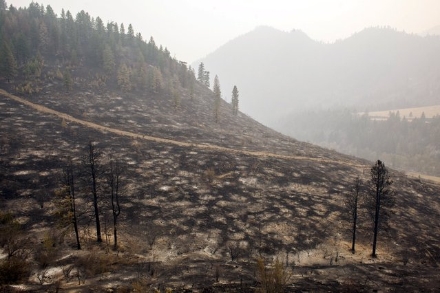 A hillside burned by the Okanogan Complex fire is pictured near Tonasket, Washington August 25, 2015. In north-central Washington, a cluster of deadly fires dubbed the Okanogan Complex has burned more than 258,339 acres (104,546 hectares), overtaking last year's Carlton Complex fire as the state's largest on record. (Photo by David Ryder/Reuters)