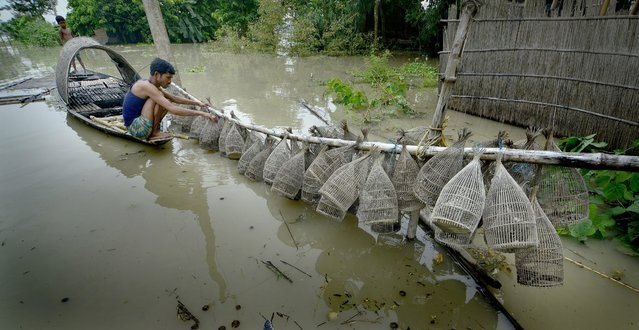 Picture made available on 18 August 2014 a man taking valve traps for fishing in the flood affected Morigaon district of Assam state, India,17 August 2014. Dozens of people were killed and more than a million affected as floods driven by torrential monsoon rains ravaged India's northern and eastern states as the monsoon season in India usually lasts from June until September and exacts a heavy toll, both in terms of human lives and destruction of agricultural crops and property. (Photo by EPA/STR)