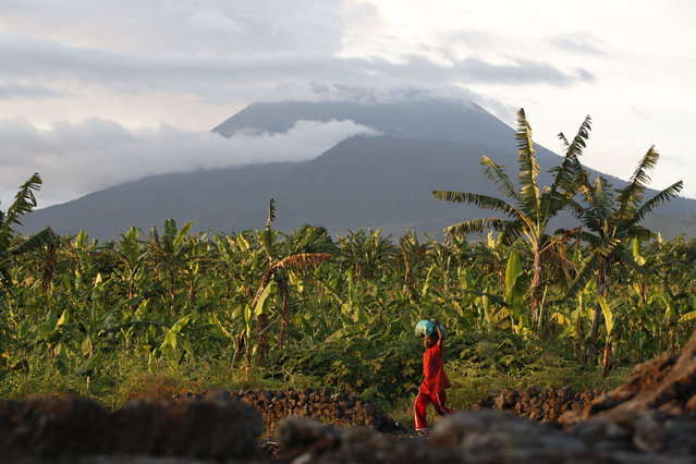 In this March 29, 2010 file photo, a resident walks past banana trees near the base of Mount Nyiragongo, one of Africa's most active volcanos, in Goma, Congo. Traumatized farmers are slowly returning to fields decimated by the 2002 eruption of Mount Nyiragongo in eastern Congo. Flowing lava flattened more than 30 percent of the city of Goma, 20 kilometers away. (Photo by Rebecca Blackwell/AP Photo)