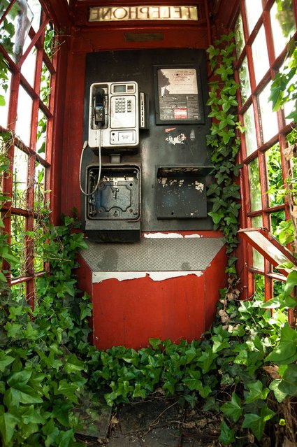 """Green and Red Telephone Box"". Botanical category winner. (Photo by Philip Braude/British Wildlife Photography Awards 2014)"