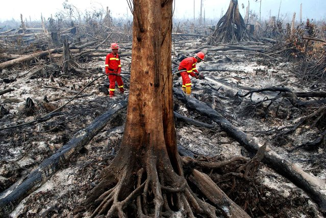 Indonesian fire fighters work to put out a fire in Giam Siak Kecil biosphere reserve, home for rare, endangered and endemic species, in Riau province on September 3, 2015. (Photo by AFP Photo/Alfachrozie)