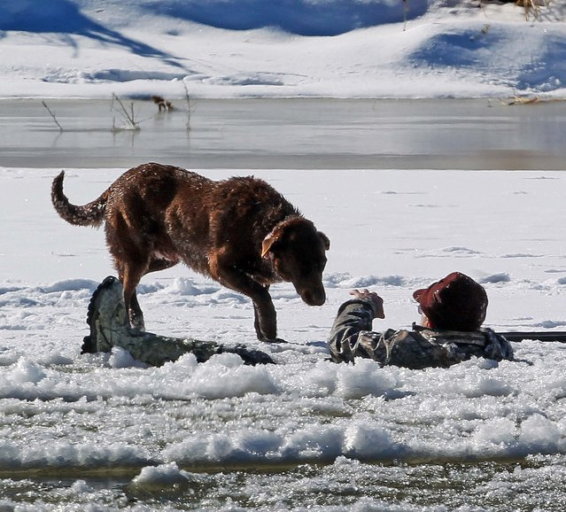 A hunter gestures his dog away as he waits in the Colorado River to be rescued in Mesa County, Colorado, January 15, 2013. The man fell in while retrieving a goose he shot. Grand Junction Fire Department and Lower Valley Fire Department responded to the scene to rescue the man, who reportedly had been in the water for nearly 30 minutes. (Photo by Dean Humphreyo/The Grand Junction Daily Sentinel)