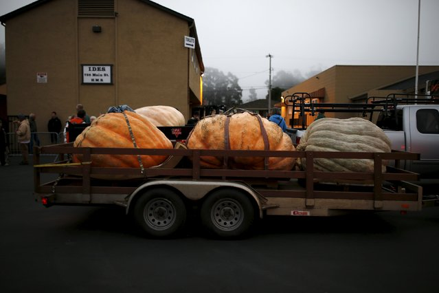 Three pumpkins on a trailer are seen on Main Street during the annual Safeway World Championship Pumpkin Weigh-off in Half Moon Bay, California October 12, 2015. (Photo by Stephen Lam/Reuters)