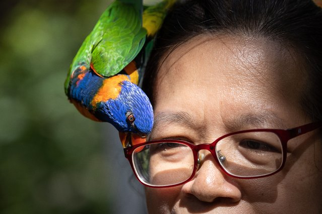 A rainbow Lorikeet, (trichoglossus haematodus), tries to grab the glasses of a visitor in the Hong Kong Park aviary in Hong Kong, China, 16 September 2020. The aviary is located in Hong Kong's Central district and features 70 different species of birds. (Photo by Jérôme Favre/EPA/EFE)