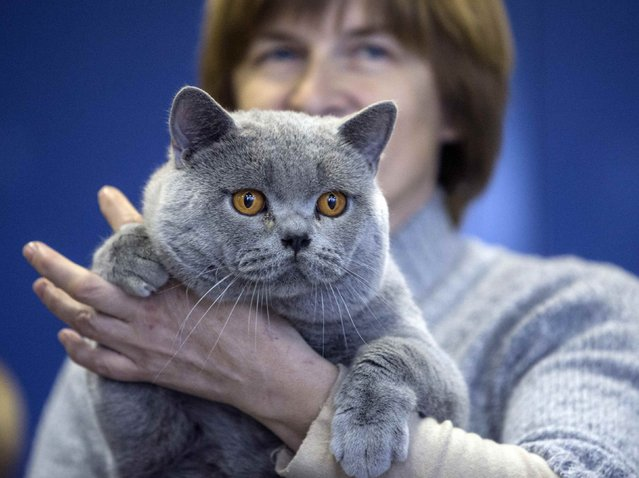 "A woman holds a cat during the exhibition ""Autumn-2014"" in Minsk, November 23, 2014. (Photo by Vasily Fedosenko/Reuters)"