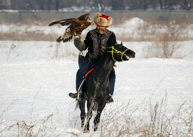 A hunter holding his tamed golden eagles rides during an annual competition at Almaty hippodrome, Kazakhstan on February 8, 2018. (Photo by Shamil Zhumatov/Reuters)