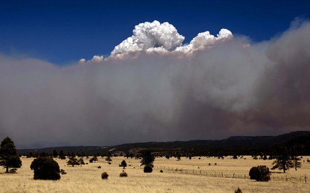 A smoke plume over the east side of the Wallow Fire climbs high into the sky as strong winds fanned the fire in Eager, 2011. (Photo by Pat Shannahan/The Arizona Republic)