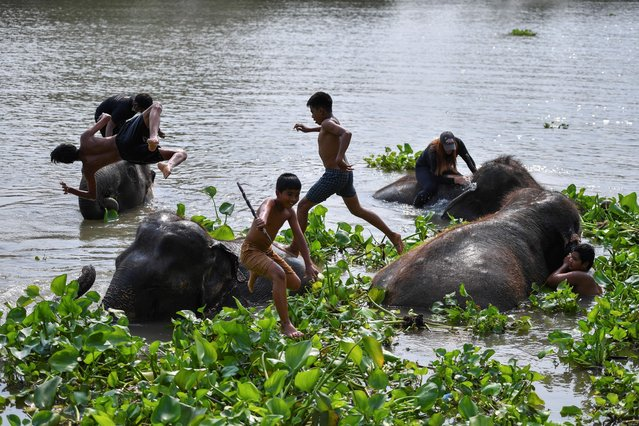 Young mahouts play with elephants in the Chao Phraya River after the celebrations of Thailand's National Elephant Day in the ancient city of Ayutthaya, Thailand, March 13, 2021. (Photo by Chalinee Thirasupa/Reuters)