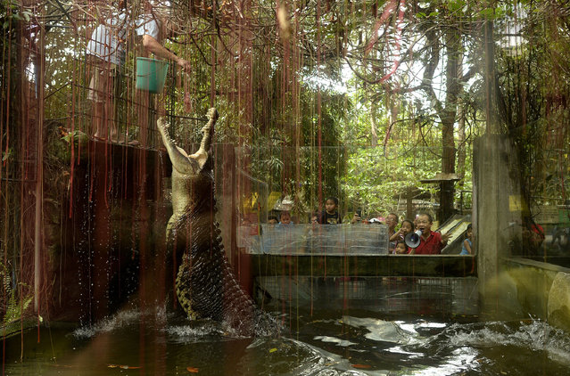 """A worker feeds a crocodile named """"Shaquille"""" at an enclosure at the Malabon Zoo in Manila on March 3, 2016, as the world celebrates 3rd World Wildlife Day. The day began in Florence, Italy, in 1931 at a convention of ecologists, whose intention was to highlight the plight of endangered species and October 4 was chosen as the date because it is the feast day of nature lover Francis of Assisi, the patron saint of animals and the environment. (Photo by Noel Celis/AFP Photo)"""
