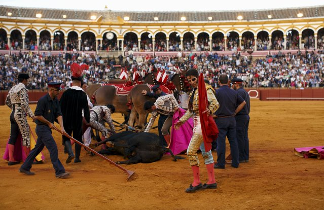 Spanish matador Juan Jose Padilla (R) walks past a bull after killing it during a bullfight at The Maestranza bullring in the Andalusian capital of Seville, southern Spain April 25, 2015. (Photo by Marcelo del Pozo/Reuters)