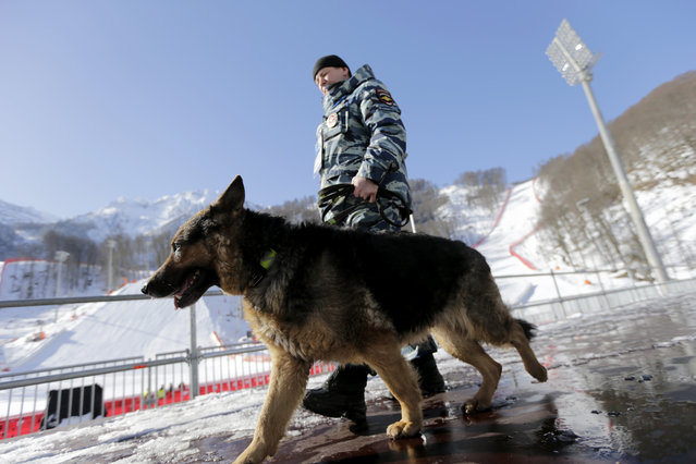 A Russian security forces K-9 officer patrols with his dog near the finish area of the Alpine ski course ahead of the 2014 Sochi Winter Olympics, Tuesday, February 4, 2014, in Krasnaya Polyana, Russia. (Photo by Gero Breloer/AP Photo)