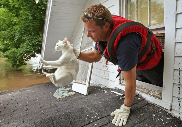 Cedar Rapids firefighter Jeremy Wagner rescues a cat from the attic of a flooded home June 13, 2008 in Cedar Rapids, Iowa