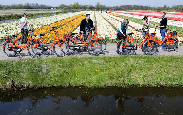 7. NETHERLANDS: Cyclists visit a Dutch tulip field in Noordwijk April 24, 2010. (Photo by Michael Kooren/Reuters)