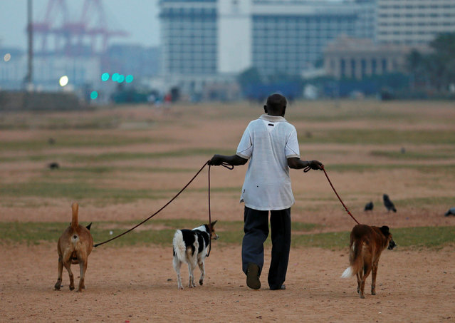 A man walks his dogs along the Galle Face Green on the early morning in Colombo, Sri Lanka January 18, 2017. (Photo by Dinuka Liyanawatte/Reuters)