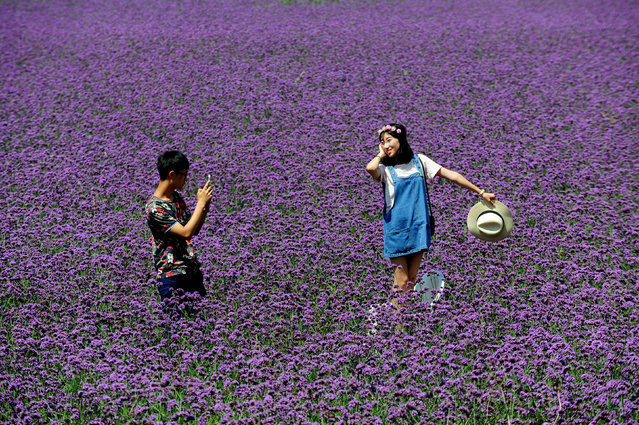 Visitors in play blossoming lavender at China's largest lavender theme park in Shenbei New District on August 12, 2015 in Shenyang, Liaoning Province of China. More than 799,920 square meters of lavender blossomed in China's largest lavender theme park which attracted visitors to enjoy. (Photo by ChinaFotoPress/ChinaFotoPress via Getty Images)