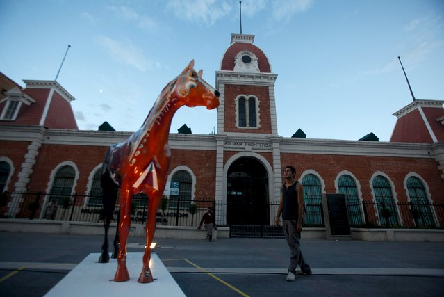 A man looks at a sculpture of a fiberglass horse in downtown Ciudad Juarez, Mexico, August 25, 2015. Twenty fiberglass horses, designed and painted by local artists, were displayed to the public on Tuesday by the local government in order to attract tourism and to show an improvement of the urban image, local media reported. (Photo by Jose Luis Gonzalez/Reuters)