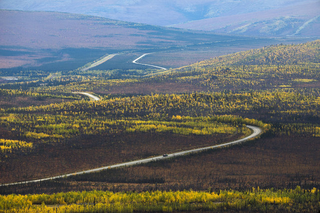 The Dalton Highway winds through strands of birch trees near Yukon River Camp, Alaska, USA, 03 September 2017. Stretching 414 miles (666 kilometers) north from central Alaska to Prudhoe Bay, the Dalton Highway is one of America's northernmost roads and arguably its most remote. Built as a supply road for the Trans-Alaska Pipeline, the Dalton was opened to public use in 1981. Largely gravel and littered with potholes, a round-trip drive takes four days. Though it still offers few facilities and no radio, cell service, or internet the Haul Road, as it is often called, rewards its rare visitors with spectacular Arctic scenery. (Photo by Jim Lo Scalzo/EPA)