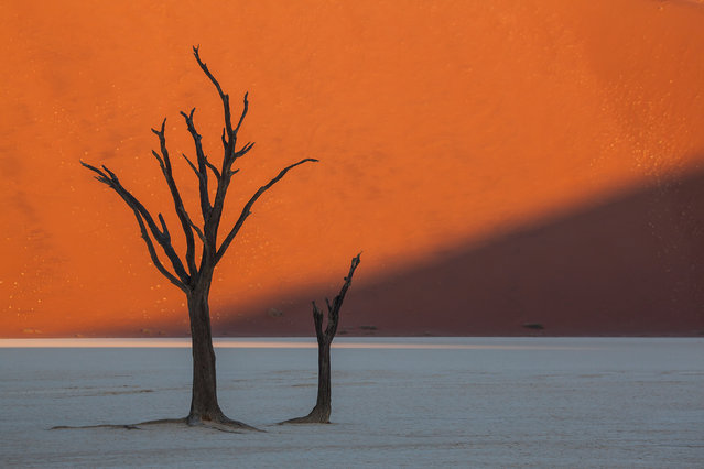 """Dead Vlei Trees at Sunset"". The dead trees at Dead Vlei, in Sossusvlei, Namibia, create stark silhouettes against the intense orange color of the sand. A dune towering 1,000 feet creates a backdrop as the shadow cast by a nearby dune moves across the wall of sand and shades the ground and trees of the dry mud flat. Photo location: Dead Vlei, Sossusvlei, Namibia. (Photo and caption by Beverly Houwing/National Geographic Photo Contest)"