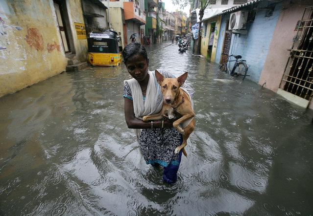 A woman carries a dog as she wades through a water-logged neighbourhood during rains in Chennai, India, November 1, 2017. (Photo by P. Ravikumar/Reuters)