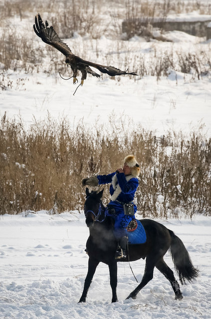 A hunter releases his tamed golden eagle during the annual hunters competition at Almaty hippodrome, Kazakhstan on February 8, 2018. (Photo by Shamil Zhumatov/Reuters)