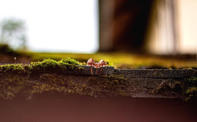 Nature on My Doorstep, finalist. Mushrooms on My Roof by Tamara Wagner-Bosancic, taken in Gaming, Austria. (Photo by Tamara Wagner-Bosancic/REDISCOVER Nature/EEA)