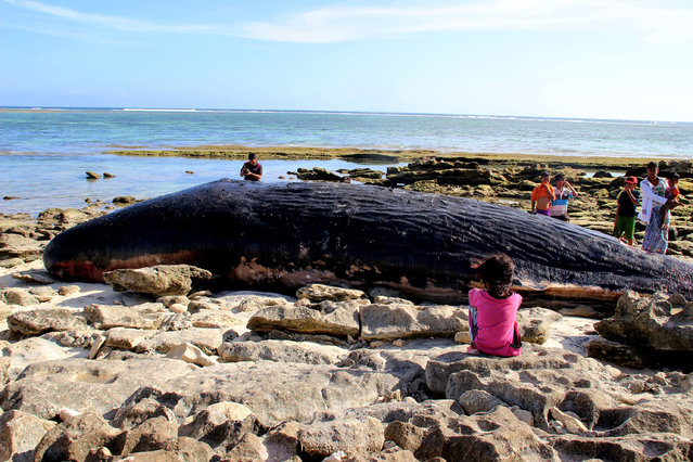 Residents gather to catch a glimpse of a carcass of a nine- meter long sperm whale that washed ashore on Tabuan Beach in East Lombok on March 29, 2018. Lombok Island is a next- door neighbour to the more well known resort island of of Bali. (Photo by AFP Photo/Stringer