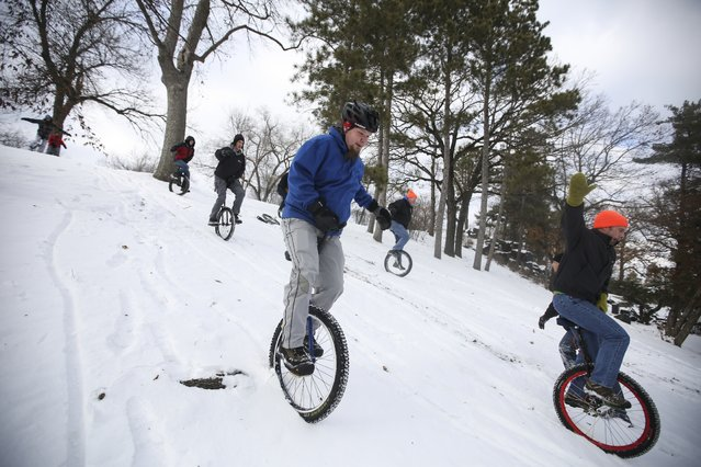 "Joe Lind(blue jacket) rode off-rode down a hill with other unicyclists during the Twin Cities Unicycle Club annual New Yeard Day ""Tundracon"" ride at Lake Como on Thursday, January 1, 2015 in St. Paul, Minn. (Photo by Renee Jones/Schneider)"