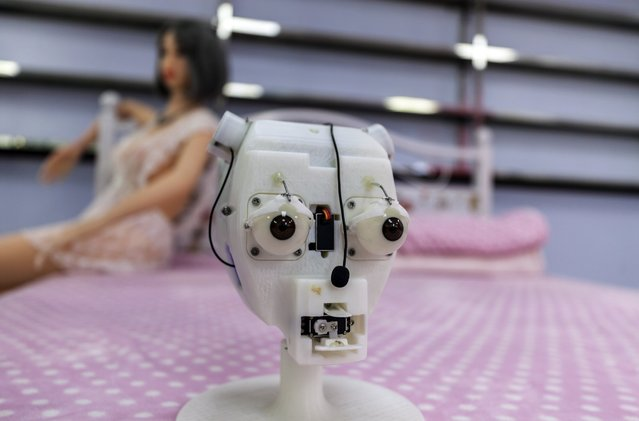 Electronic scull of the AI s*x doll robot is seen in Shenzhen Atall Intelligent Robot Technology headquarters in Shenzhen, Guandong Province, China, 12 March 2018. Shenzhen Atall Intelligent Robot Technology is one of China's leading companies for robots equipped with AI (artificial intelligence). Among the company's various AI robot products, its best-selling is an AI s*x robot named Emma. The multi-functional machine is linked to the internet and Android operating system and features high stimulation capabilities. s*x robots have soft and elastic skin made of modified thermoplastic elastomers (TPE) material, with less oil content and no smell. Its temperature adjustment is set to 37 C to resemble a human's. Safety issues are managed with anti-electric shock, anti-fire and anti-explosion measures. And the addition of body sensors help make s*x robots feel more like a human. But a semblance of authenticity doesn't come cheap, and Emma's online retail price is about 20,000 RMB ($3,136) with most customers being men aged 40-50.  Most clients are from Europe and the United States. There is also high interest for s*x robots in the Middle East but importing them and s*x toys into these countries is prohibited. It's a similar situation with Brazil, Chile and Argentina along with Russia and Philippines - where customs clearance for the robots is problematic. Male s*x robots are also on the market but the sales volume is nine times lower compared to the female models. However, the market is constantly changing, and in recent years demand for male s*x robots has been increasing, such as in Korea and Thailand. Shenzhen Atall also sells child-size AI s*x robots, both male and female and the biggest market for them is the US and Canada. (Photo by Aleksandar Plavevski/EPA/EFE)