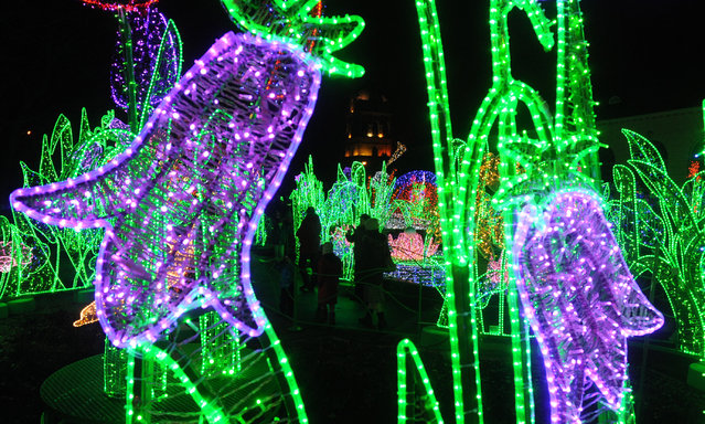 People visit the Royal Garden of Light in Warsaw, Poland, Sunday, November 29, 2015. The Royal Garden of Light, with plants and decorations made of thousands of colorful diodes, is a winter exhibition that brightens up the garden surrounding the Wilanow Palace. (Photo by Alik Keplicz/AP Photo)