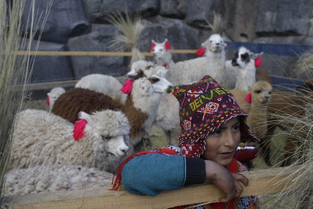 "A youth guards his llamas during preparations for the Inca ceremony ""Inti Raymi"" at the Saqsaywaman ruins in Cuzco, Peru, Sunday, June 24, 2018. Across the Andes, from the tip of Argentina as far north as Colombia, indigenous communities along the path of what was once the Incan Empire are gathering for the southern hemisphere's winter solstice to honor the ancient sun god Inti. (Photo by Martin Mejia/AP Photo)"