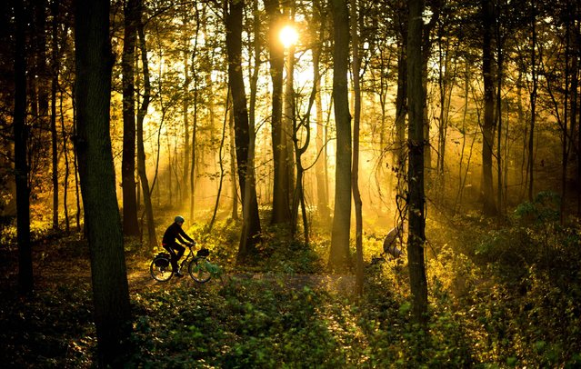 Cyclists ride their bikes through a forest during sunrise in Hannover, northern Germany, Tuesday, November 11, 2014. (Photo by Julian Stratenschulte/AP Photo/DPA)