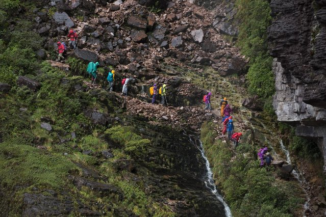 Tourists walk down from the top of Roraima Mount, near Venezuela's border with Brazil January 18, 2015. (Photo by Carlos Garcia Rawlins/Reuters)