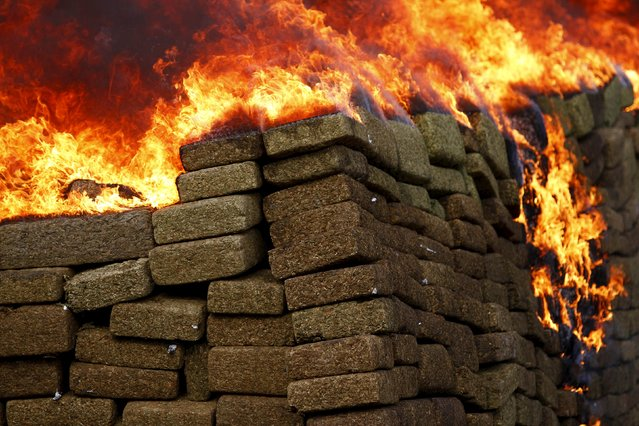 A pile of marijuana is being incinerated at a camp of the Mexican Army's 28th infantry battalion in Tijuana, Mexico, November 27, 2015. Around 18 tonnes of marijuana and over one tonne of methamphetamine were incinerated after being confiscated in different operations, according to local media. (Photo by Jorge Duenes/Reuters)