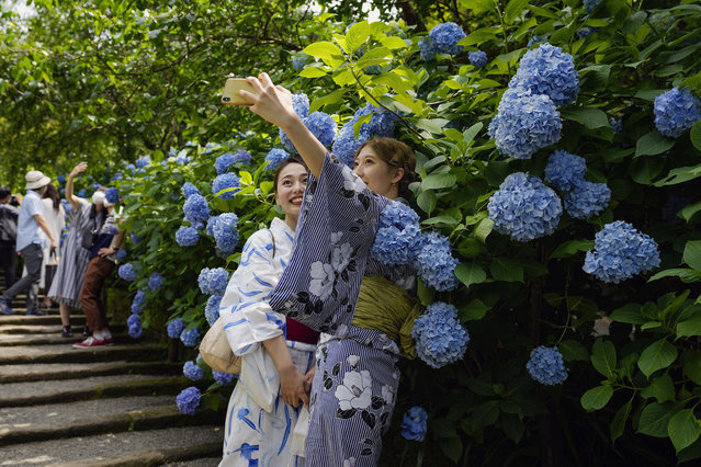Visitors take masks off to take pictures as hydrangea flowers are fully blooming at Meigetsu-in Buddhist temple Friday, June 11, 2021, in Kamakura, south of Tokyo. (Photo by Kiichiro Sato/AP Photo)