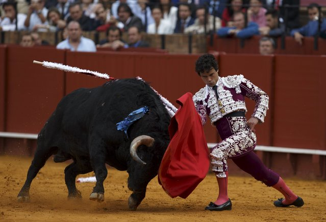 Spanish matador Miguel Abellan performs a pass to a bull during a bullfight at The Maestranza bullring in the Andalusian capital of Seville, southern Spain April 25, 2015. (Photo by Marcelo del Pozo/Reuters)