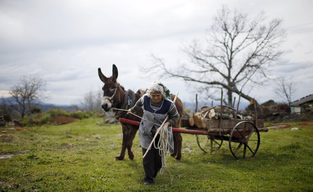 Mariana Teixeira pulls of a cart with firewood in Povoa de Agracoes, near Chaves, Portugal April 18, 2016. (Photo by Rafael Marchante/Reuters)