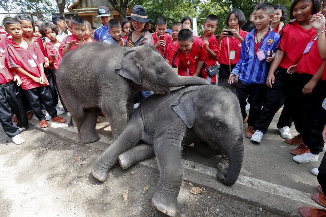 Students and their teacher play with elephants at a camp in the ancient Thai capital Ayutthaya, north of Bangkok, Thailand, August 11, 2015. (Photo by Chaiwat Subprasom/Reuters)