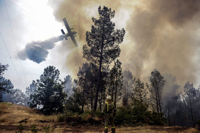 A firefighter observes a helicopter as it tries to extinguish a fire in Castro Beiro, Galicia, northwestern Spain, 11 August 2015. (Photo by Brais Lorenzo/EPA)