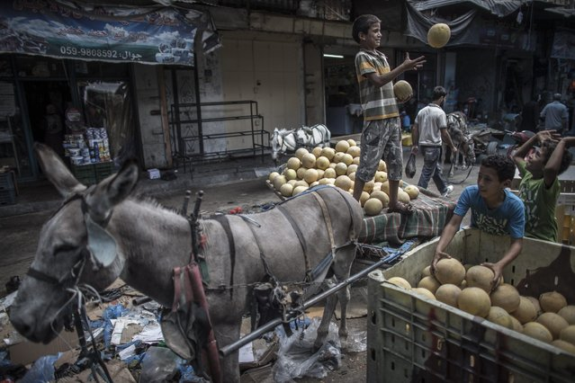 Palestinian boys load a donkey cart with melons in a street market in Gaza City, 17 July 2014. Daily life resumed for a short while during a five hours long ceasefire between Israel and Gaza requested by the United Nations. An Israeli delegation left Cairo 17 July 2014 after talks with Egyptian officials on a proposed long-term truce for the Gaza Strip. (Photo by Oliver Weiken/EPA)
